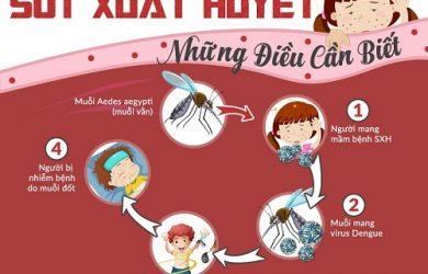 vòng lây bệnh sốt xuất huyết
